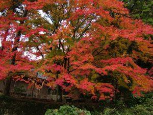 城上神社紅葉